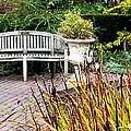 Garden Bench by Nikki Dalton