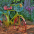 Garden Bike At William And Mary by Jerry Gammon
