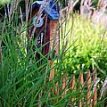 Garden Birdhouse by Melissa Smith
