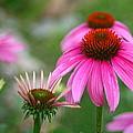 Garden Bouquet by Laurel Gillespie