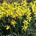 Garden Brighteners by Brenda Ketch