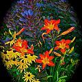 Garden Color Delight by Tim G Ross