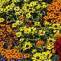 Garden Colors by Garry Gay