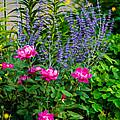Garden Delights by Steve Harrington