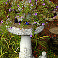 Garden Flowering Pot by Eva Thomas