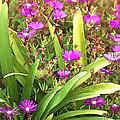 Garden Flowers by Dan Sabin