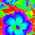 Garden Flowers / Solarized Effect by Robert Butler