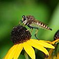 Garden Fly by Marty Fancy