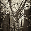 Garden Gate by Paul W Faust -  Impressions of Light