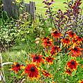 Garden Glimpse by Laraine Roach