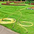 Garden Hosepipes by Tom Gowanlock