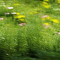 Garden Impressions by Margie Hurwich