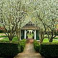 Garden In Full Bloom by Robert DeFosses