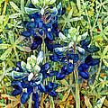 Garden Jewels I by Hailey E Herrera