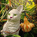 Garden Kitty In The Fall by GG Burns