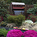 Garden Miniature Train by Sally Weigand