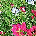 Garden Of Austria by Elvis Vaughn