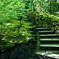 Garden Path by Brian Jannsen
