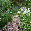 Garden Path by Cindy Singleton