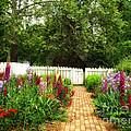 Garden Path by Shari Nees