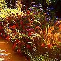 Garden Pathway by Amy Vangsgard