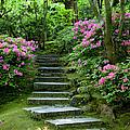 Garden Pathway by Brian Jannsen