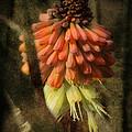 Garden Poker Flower by Michael Eingle