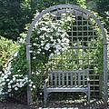 Garden Respite by Barbara McDevitt