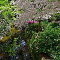 Garden Sanctuary by Denise Mazzocco