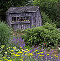 Garden Shed by David Freuthal
