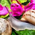 Garden Snails by Roy Pedersen