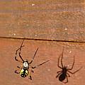 Garden Spider by Christina McKinney