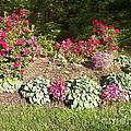 Garden Splender by Elinor Helen Rakowski