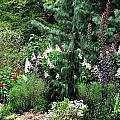 Garden Spread by Deborah  Crew-Johnson