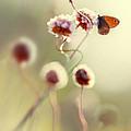 Garden Stories V by Jaroslaw Blaminsky