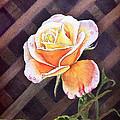 Garden Tea Rose by Irina Sztukowski