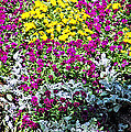 Garden Variety by Aimee L Maher ALM GALLERY