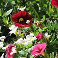 Garden Variety by John Will