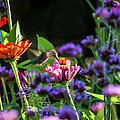 Garden Visitor by Straublund Photography