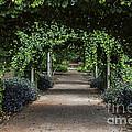 Garden Walkway by John Zawacki