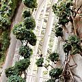 Garden Window by Elin Mastrangelo