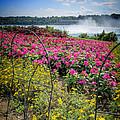 Garden With A View Niagara Falls by LeeAnn McLaneGoetz McLaneGoetzStudioLLCcom