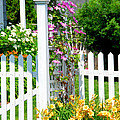 Garden With Picket Fence by Elena Elisseeva