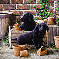 Gardeners Corner by John Silver