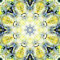 Gardenia Mandala by Susan Bloom