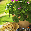 Gardening by Elena Elisseeva