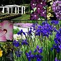 Gardens Of Beauty by Kay Novy