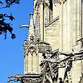 Gargoyles Of Notre Dame De Paris by Carla Parris