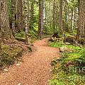 Garibaldi Path To Cheakamus Lake by Adam Jewell
