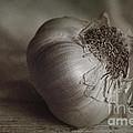Garlic 4 by Elena Nosyreva